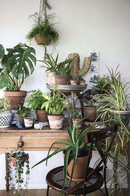 my+plant+gang